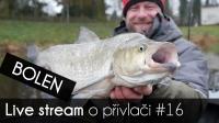 VIDEO: Přívlač Live #16 Bolen dravý - lov a jeho život | odpovědi | tipy a triky