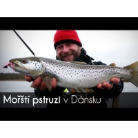 VIDEO: Mořští pstruzi v Dánsku