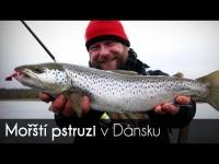 VIDEO: Mořští pstruzi v Dánsku