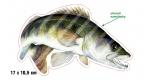 Rybářská samolepka CANDÁT P