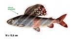 Rybářská samolepka LIPAN L