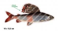 Rybářská samolepka LIPAN P