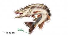 Rybářská samolepka ŠTIKA 2 L