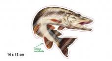 Rybářská samolepka ŠTIKA 2 P